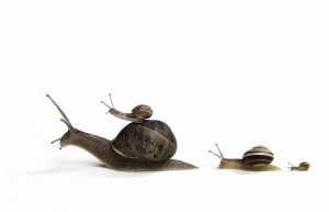 Racing at the speed of snails